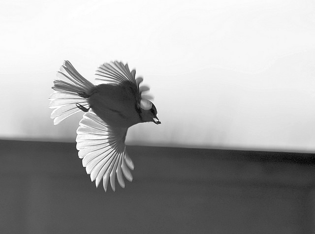 Bird Micolo J on Flickr