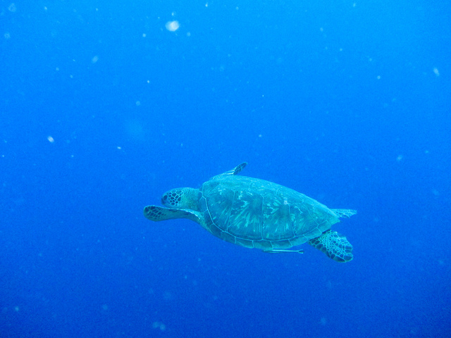 turtle by mstofer flickr